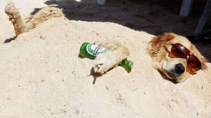 Depois da cachaça na praia!