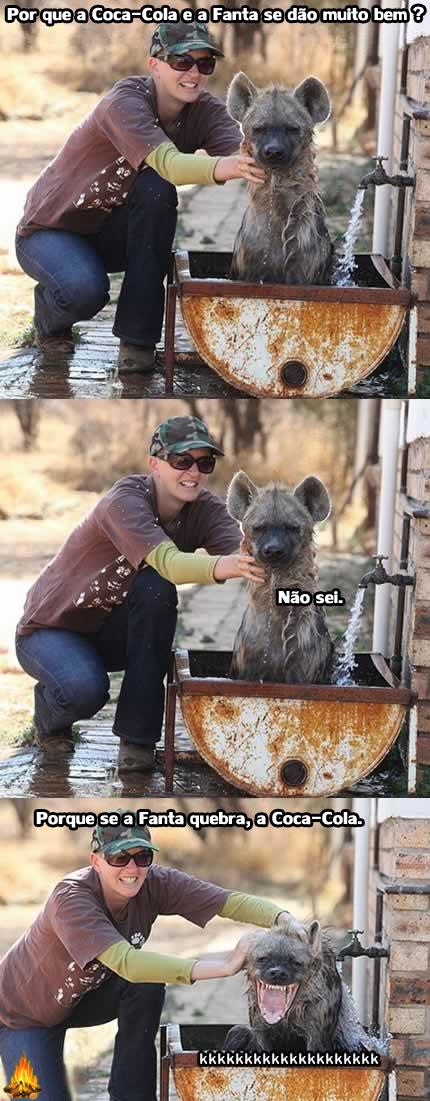Contando a piada para uma animal!